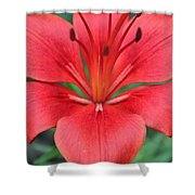 Botanical Beauty 2 Shower Curtain