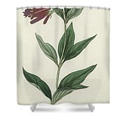 Botanical Engraving Shower Curtain