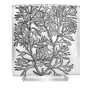 Botany: African Rue, 1597 Shower Curtain
