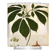 Botany: Ginseng Shower Curtain
