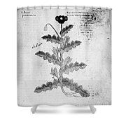Botany: Opium Poppy Shower Curtain