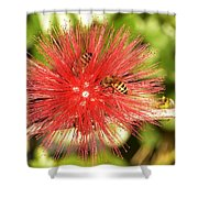 Powder Puff Flower With Bees Shower Curtain