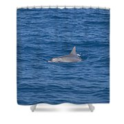 Bottlenose Dolphin Shower Curtain