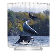 Bottleneck Dolphin Playing Shower Curtain