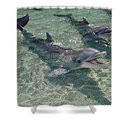 Bottlenose Dolphin In Shallow Lagoon Shower Curtain