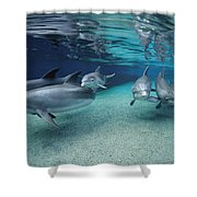 Bottlenose Dolphins In Shallow Water Shower Curtain