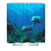 Bottlenose Dolphins Over Reef Shower Curtain