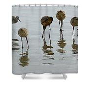 Shorebirds 1 Shower Curtain