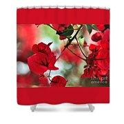 Bougainvillea Beauty Shower Curtain