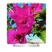 Bougainvillea Beauty Shower Curtain