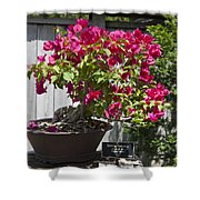 Bougainvillea Bonsai Tree Shower Curtain