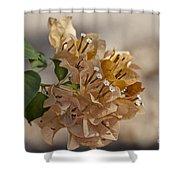Bougainvillea Flowers  Shower Curtain
