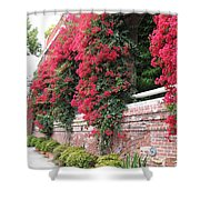 Bougainvillea Wall In San Francisco Shower Curtain