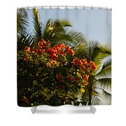 Bougainvilleas And Palm Trees Swaying In The Wind In Waikiki Honolulu Hawaii Shower Curtain