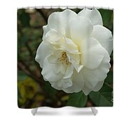 Bountiful White Rose... Shower Curtain