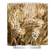 Bounty Of Nature And Labour - Featured 3 Shower Curtain