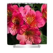 Bouquet Of Pink Lily Flowers Shower Curtain