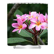 Bouquet Of Pink Plumeria Shower Curtain