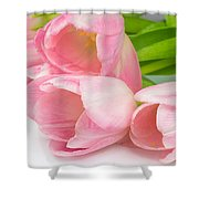 Bouquet Of Pink Tulips. Shower Curtain