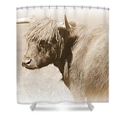 Bovine With Bangs Shower Curtain