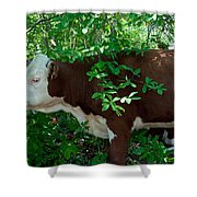 Bovine In The Shade Shower Curtain