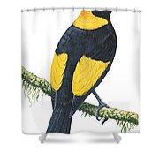 Bowerbird  Shower Curtain