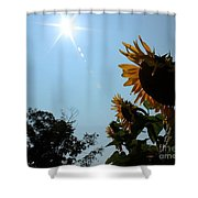 Bowing To The Sun Shower Curtain