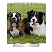 Boxer And Border Collie Shower Curtain