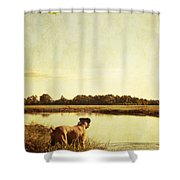 Boxer Dog By The Pond At Sunset Shower Curtain by Stephanie McDowell