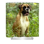 Boxer Dog Shower Curtain
