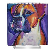 Boxer Dog Portrait Shower Curtain by Robyn Saunders