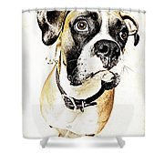 Boxer Dog Poster Shower Curtain