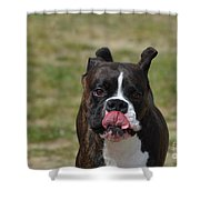 Boxer Licking His Chops Shower Curtain