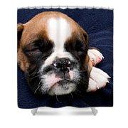 Boxer Puppy Sleeping Shower Curtain by Weston Westmoreland