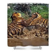 Boxing Bengal Tigers Wildlife Rescue Shower Curtain