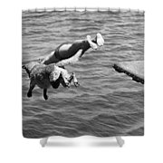 Boy And His Dog Dive Together Shower Curtain
