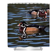 Boys Night Out Shower Curtain by Skip Willits