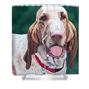Bracco Italiano  Shower Curtain