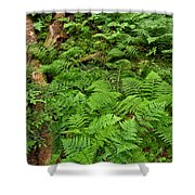 Bracken Shower Curtain