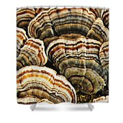Bracket Fungus 1 Shower Curtain