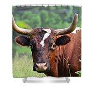 Braford Bull Shower Curtain