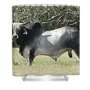 Brahama Bull Shower Curtain
