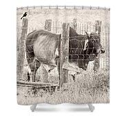 Brahman Bull Shower Curtain