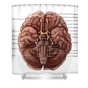 Brain And Cranial Nerves Shower Curtain