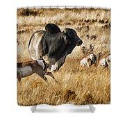 Brahma Bull Meets The Pronghorn Shower Curtain