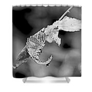 Bramble Leaves - Black And White Shower Curtain