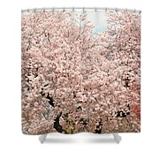 Branch Brook Cherry Blossoms Iv Shower Curtain