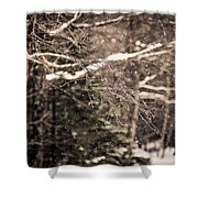 Branch In Forest In Winter Shower Curtain