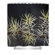 Branch In Winter Shower Curtain