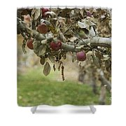 Branch Of An Apple Tree Shower Curtain by Juli Scalzi